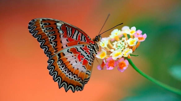 Butterflies have scales on their wings